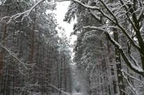 Winterimpressionen 6